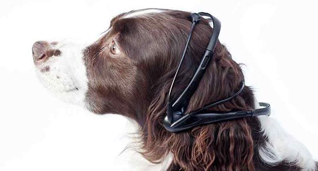 No More Woof - устройство для перевода эмоций собаки в человеческую речь