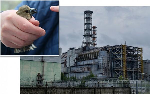 sn-chernobyl