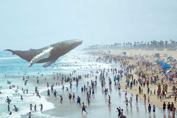whale_1136.0.0_standard_800.0