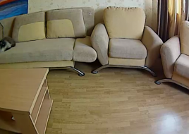 petcube_1427967331335