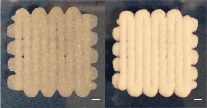 bioprinted-material