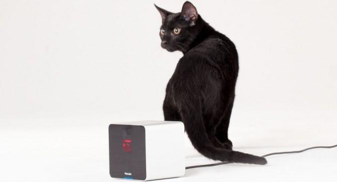 PocketBook_Petcube Partnership(2)