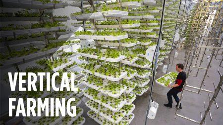 Крупнейшая вертикальная ферма в Нью-Джерси не использует землю и экономит 95% воды