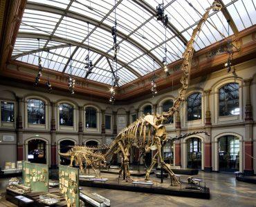 Миллионы лет эволюции Земли теперь можно изучать в приложении Google Arts & Culture