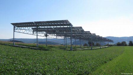 Двойной урожай: Агрофотоэлектрические станции позволят совместить солнечную энергетику и сельское хозяйство