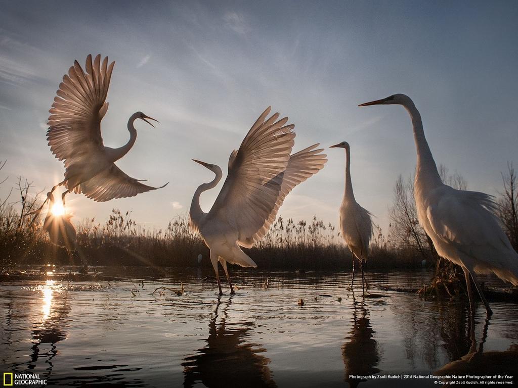 Фотогалерея дня: лучшие фотографии дикой природы за 2016 год по версии National Geographic