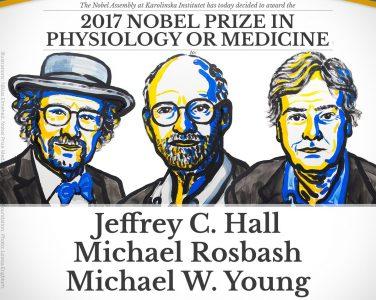 Нобелевскую премию по физиологии и медицине дали за исследование биологических часов