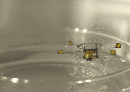 Робот-насекомое RoboBee научился выныривать из воды и взлетать с её поверхности