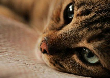 Kedi / «Город котов»