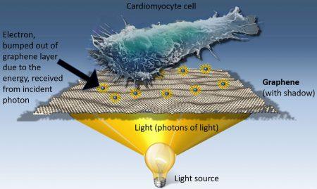 Стимуляция клеток с помощью графена может помочь избавиться от рака