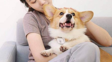 Новинки Xiaomi: умный ошейник для собак за $30 и фильтр для воды за $16