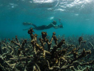 Ученые напечатают коралловые рифы, чтобы спасти гибнущую экосистему