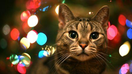 Решение Pet Detector оповестит вас о том, что ваш кот просится домой