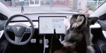 В электромобилях Tesla появился режим Dog Mode для поддержания комфортной для животных температуры в салоне