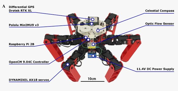 AntBot - робот, который использует для навигации методы пустынных муравьев