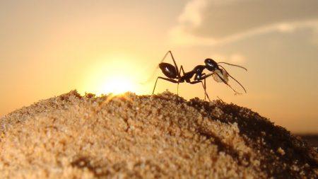 AntBot — робот, который использует для навигации методы пустынных муравьев
