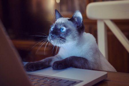 КГГА: Электронный реестр домашних животных и жетон с QR-кодом — самый быстрый способ найти потерявшегося домашнего любимца