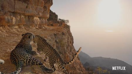Netflix опубликовал трейлер документального сериала Our Planet