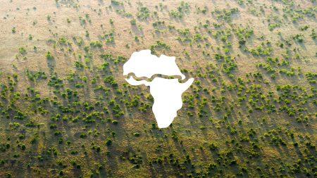 Свыше 20 африканских стран объединились, чтобы высадить «Великую зеленую стену» для защиты от расширяющейся Сахары