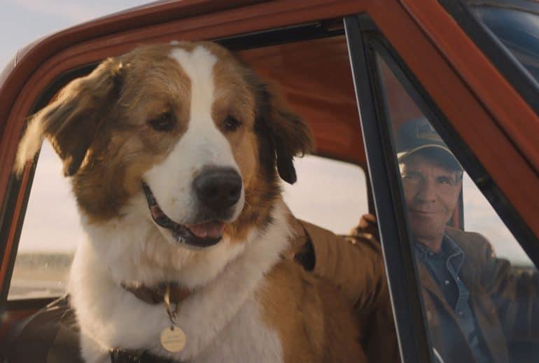 Рецензия на фильм «Путешествие хорошего пса» / A Dog's Journey - ITC.ua