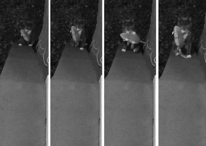 Инженер Amazon создал дверь для кота на базе ИИ, которая не позволяет приносить в дом добычу после ночной охоты
