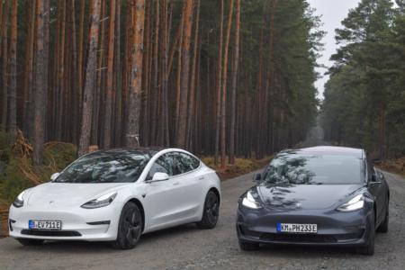 Суд распорядился прекратить вырубку леса под Gigafactory 4, но строительству нового завода Tesla ничего не угрожает