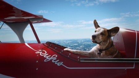 «Найди свою радость». Microsoft выпустила добрый рождественский ролик с собаками, резвящимися в Halo, Minecraft и Flight Simulator