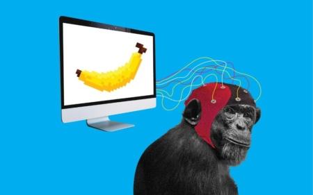 Илон Маск рассказал об обезьяне с имплантированным в мозг чипом Neuralink, способной играть в видеоигры силой мысли